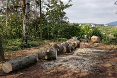 Baumfällungen 03. August 2019